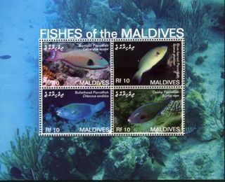 Maldives030.JPG